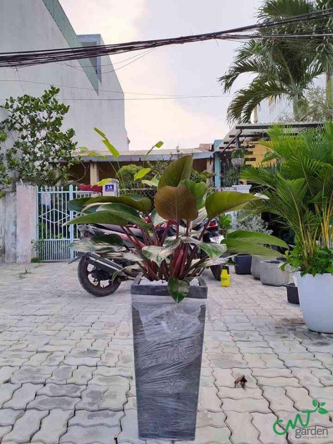 Bạn cần đặt cây tại vị trí phù hợp để cây phát triển