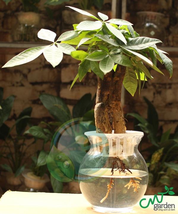 Loại cây thủy sinh trong văn phòng nào đẹp và dễ trồng?