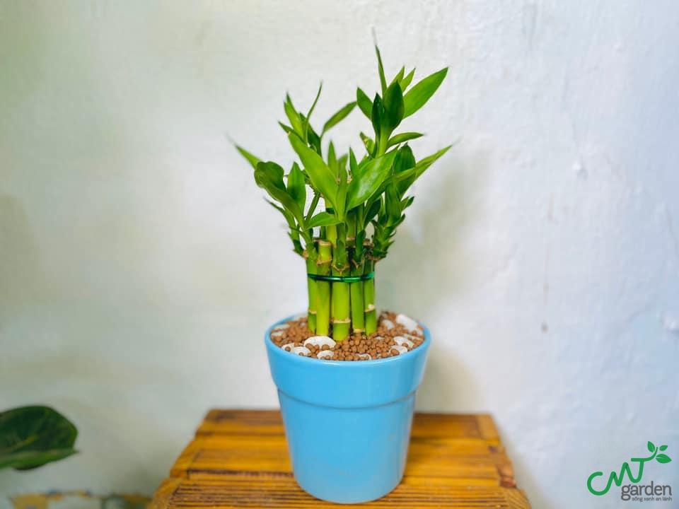 Có thể dùng cây để làm quà tặng cho người thân hay bạn bè