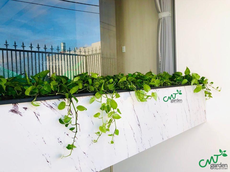 CMT Garden - địa chỉ cung cấp hạt giống và cây cảnh