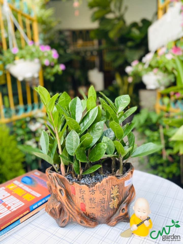 Lý do nên trồng cây cảnh phong thủy