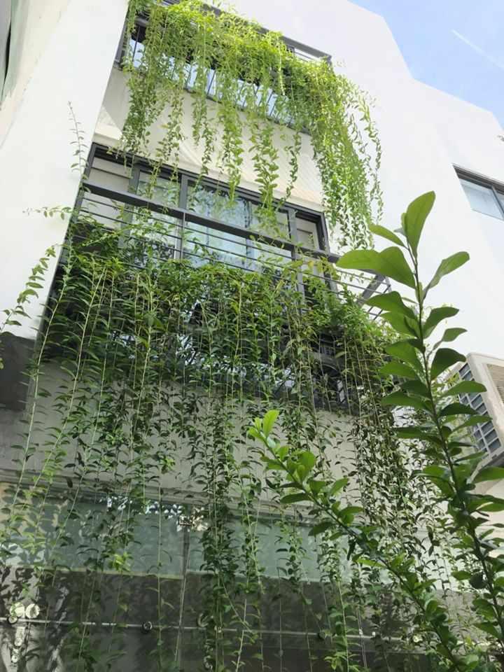 Thi Công Sân Vườn Cúc Tần Rủ tại nhà chị Anh - K20 đường Lý Tự Trọng - Đà Nẵng.