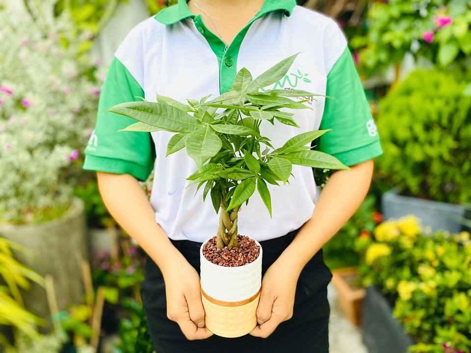 Cây Kim Ngân có vẻ đẹp độc- lạ được nhiều người yêu thích