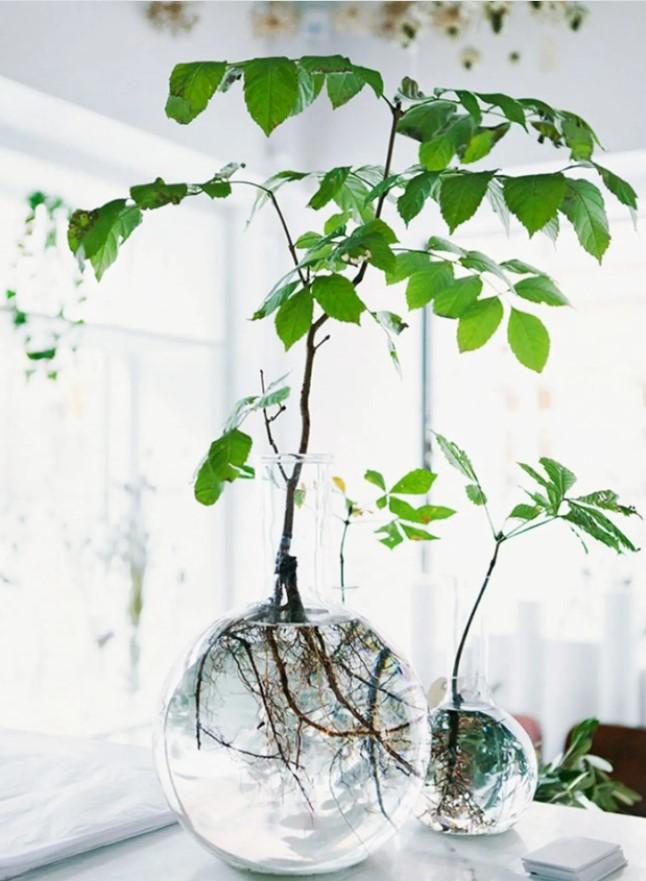 Chú ý thay nước định kỳ để giúp cây sinh trưởng tốt