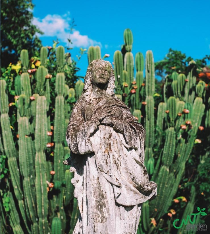 Hàng rào cây xương rồng nở hoa