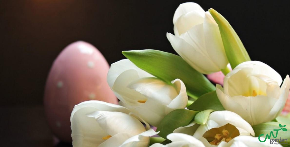 Loài hoa Tulip màu kem đại diện cho sự đằm thắm, nhẹ nhàng và nữ tính của người con gái