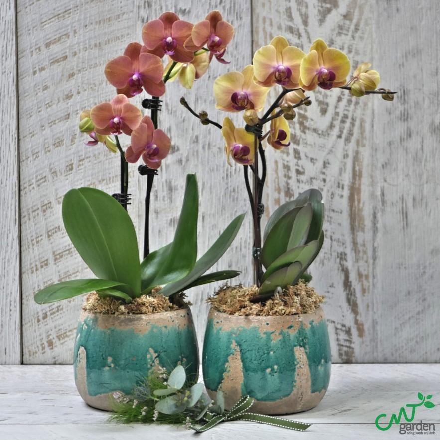 Lan Hồ Điệp dùng để làm nước hoa và hương liệu