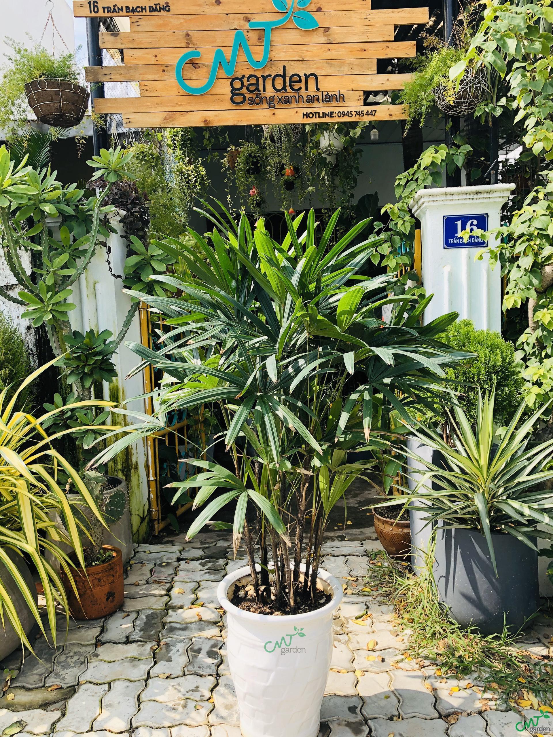 Nên lựa chọn đất sạch, độ tơi xốp cao để trồng cây
