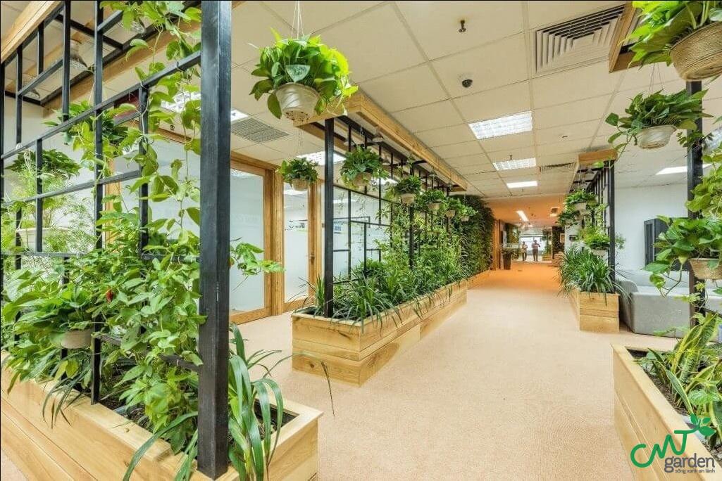 Cây xanh giúp văn phòng trở nên tươi xanh và mát mẻ